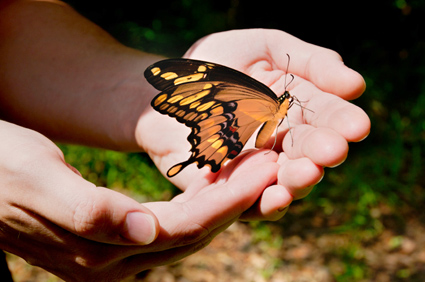 Special Touches: Butterfly Release